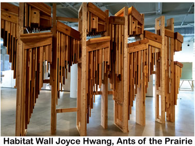 Habitat-Wall-Joyce-Hwang,-Ants-of-the-Prairie